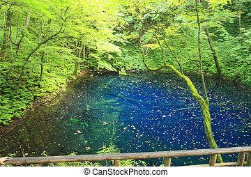 Shirakami-Sanchi(world heritage)