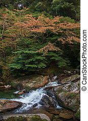 Shiratani Unsuikyo in Yakushima, natural World Heritage Site...