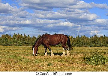 shire, pferd streifen, unter, der, düster, landschaftsbild
