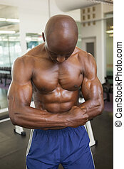shirtless, músculos, flexionar, muscular, homem