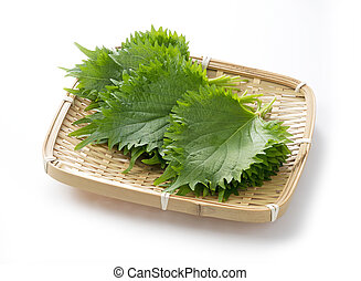 Shiso leaves on a white background