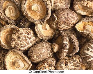 shitake, cibo, su, funghi, secco, fondo, chiudere