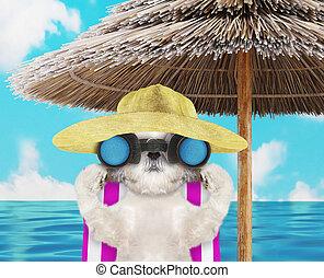 shitzu, chaise, render, chien, bains de soleil, 3d, binoculars., par, plage, regarder