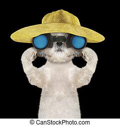shitzu, dog, in, een, hoedje, het kijken, en, verrichtend, met, verrekijker, --, vrijstaand, op, black