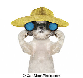 shitzu, dog, in, een, hoedje, het kijken, en, verrichtend, met, verrekijker, --, vrijstaand, op wit