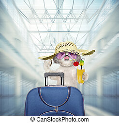 Shitzu dog waits at the airport with blue suitcase