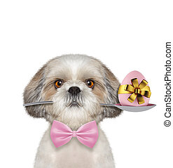 Shitzu dog with spoon and easter egg. Isolated on white