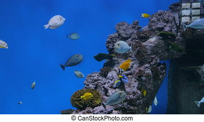 Shoal of colourful fishes swimming in huge aquarium