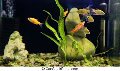 Shoal of fish in aquarium