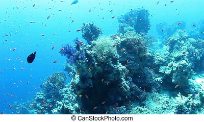 Shoal of small fish and coral reef marine life.