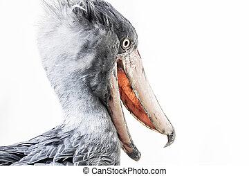 Shoebill - Balaeniceps Rex - Bird Photo Isolated on White Background