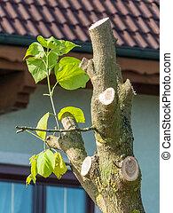 shoot at a tree - fresh shoots at a tree