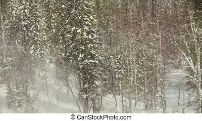 Shooting from a helicopter taking off from winter forest in...