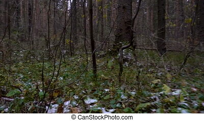 Shooting in the forest undergrowth in late autumn