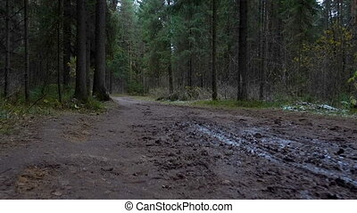 Shooting of dirty road in the forest