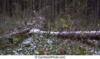 Shooting of fallen tree in the forest