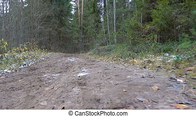 Shooting of frozen dirty road in the forest