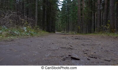 Shooting of muddy road in the forest in late autumn