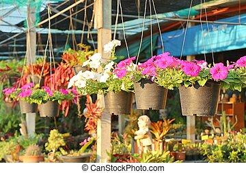 Shop for garden plants