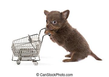 Shopping dog