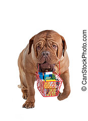 Shopping dog - Responsible dogue de bordeaux going shopping