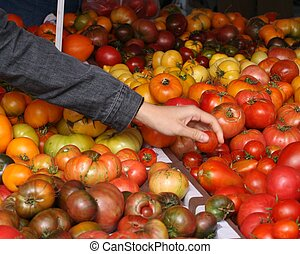 Shopping for Tomatoes