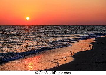 Shore Birds at Sunset
