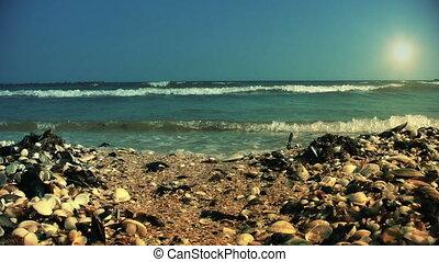Shore full of shells