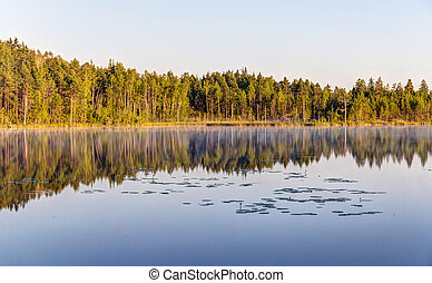 Shore of a forest lake
