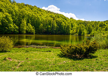 shore of a pond among the forest in springtime. lovely...