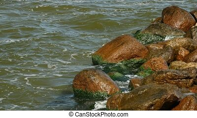 Shore of sea with green seaweed and mossy on stones in...