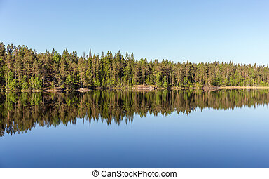 shore of the forest lake