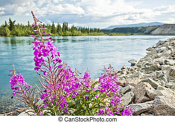 Shore of Yukon River