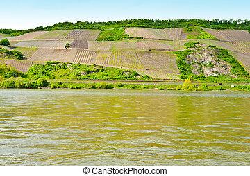 Shore the Rhine