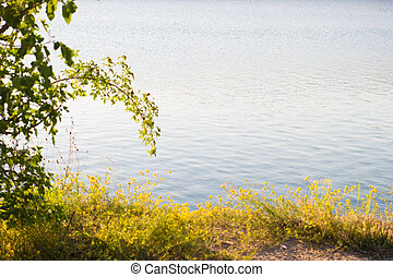 Shore with plants background of the water, quiet lake - background