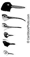 Shorebird bills 6 species