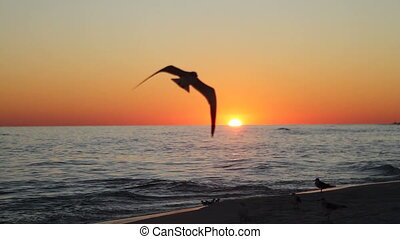 Shorebirds At Sunset - Seagulls and other shorebirds in...