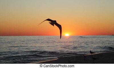 shorebirds, coucher soleil