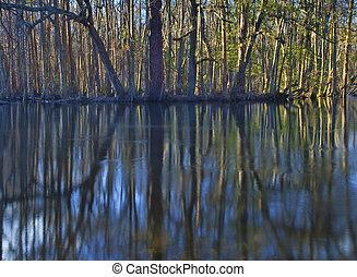 Shoreline forest