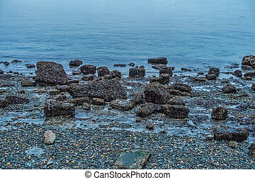 Shoreline Rocks At Low Tide