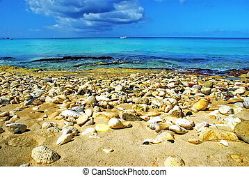 Shores of the Caribbean - This beach strewn with shells,...