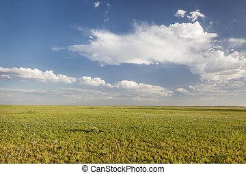 short grass prairie in Colorado
