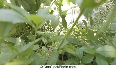 Short Vegetation to Reed Vertical Pan Shot on River Bank