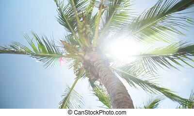 Shot from beneath a palm tree - A shot from beneath a palm...