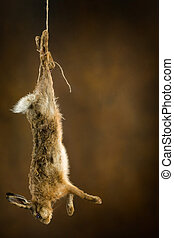 Shot hare