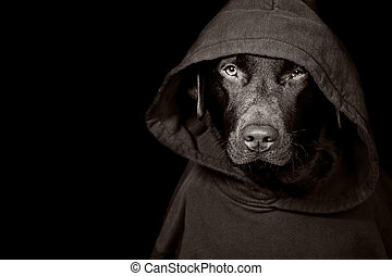 Shot of a Sinister Looking Dog in Hooded Top