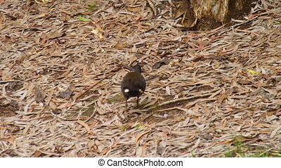 Shot of a small bird walking through brush - Medium shot...