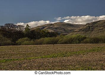 Summer Field In Scotland