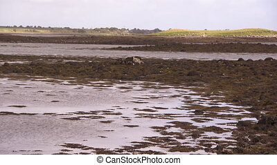 Shot of a swampy marsh in Ireland, with seaweed and moss...