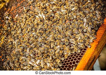 Shot of bees